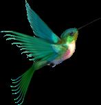 HummingbirdFlight