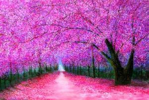 cherry-blossoms-lane-marie-line-vasseur