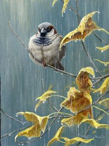 rainy_day_sparrow