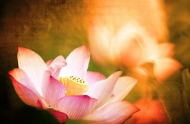 Lotus-Fire-940x440