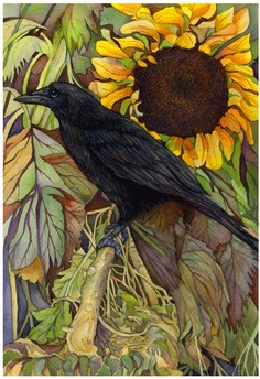 Raven Sunflower