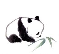 panda1a